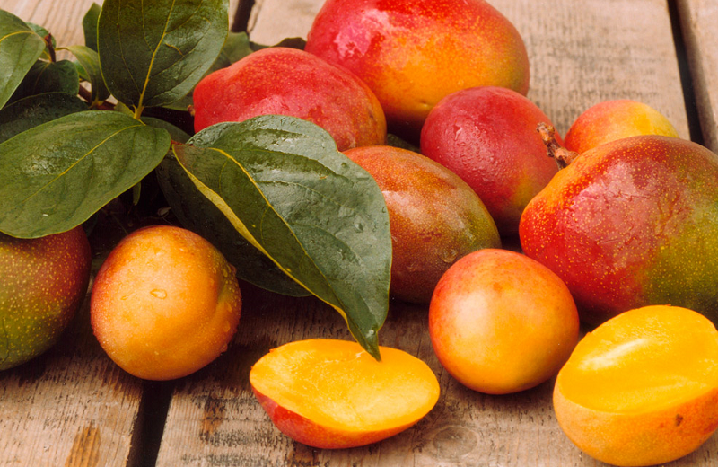 African Mango Review 11 Crucial Facts To Know Jan 2020