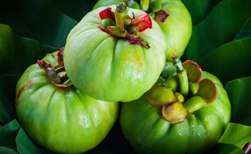 Pure Garcinia Cambogia Extract Benefits